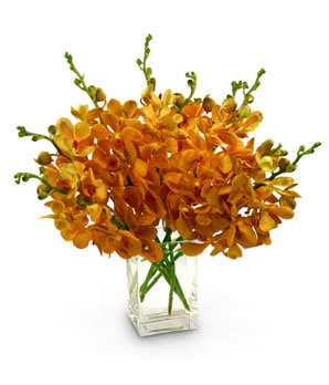 Flowers & Decor, orange, Flowers, Orchids, Mokara