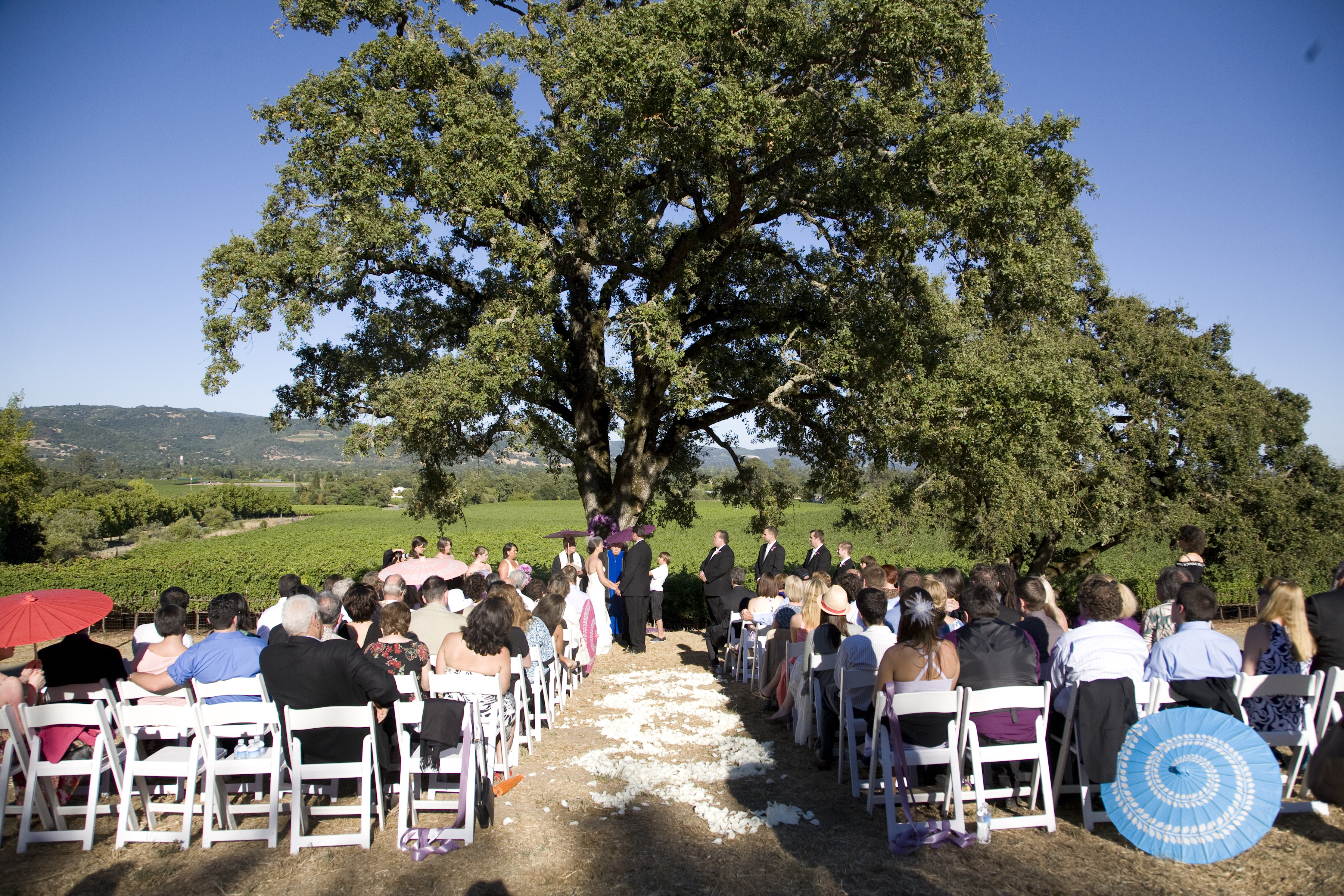 Ceremony, Flowers & Decor, purple, Vineyard, Parasols