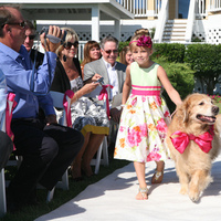 Ceremony, Flowers & Decor, pink, Ceremony Flowers, Flowers, Flower, Girl, Ring, Dog, Bearer
