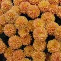 Flowers & Decor, yellow, orange, gold, Flowers