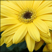 Flowers & Decor, yellow, Flowers