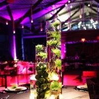Reception, Flowers & Decor, green