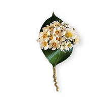 Flowers & Decor, white, green, Flowers, Boutonnière