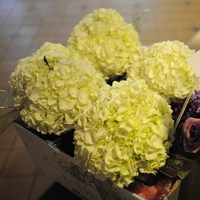 Flowers & Decor, white, purple, green, Flowers, Inspiration board