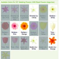 Flowers & Decor, Bridesmaids, Bridesmaids Dresses, Fashion, white, orange, pink, Bridesmaid Bouquets, Flowers, Flower Wedding Dresses