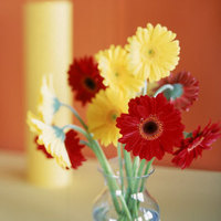 Flowers & Decor, yellow, red, Flowers