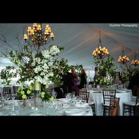 Reception, Flowers & Decor, white, green, Flowers