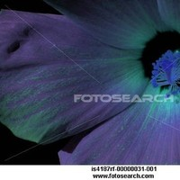 Flowers & Decor, purple, blue, green, Flowers