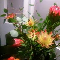 orange, pink, Proteas