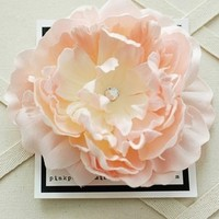 Beauty, Flowers & Decor, white, pink, Flower, Hair