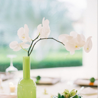 Flowers & Decor, white, Flowers, Orchid