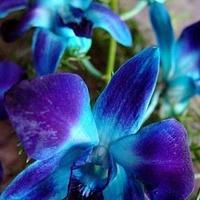 Flowers & Decor, purple, blue, Flowers
