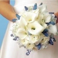 Flowers & Decor, white, blue, Bride Bouquets, Flowers, Bouquet, Calla, Lilies