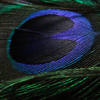 Beauty, Inspiration, blue, green, Feathers, Turquoise, Peacock, Feather, Claytonandshauna