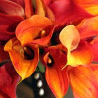 Flowers & Decor, orange, Flowers