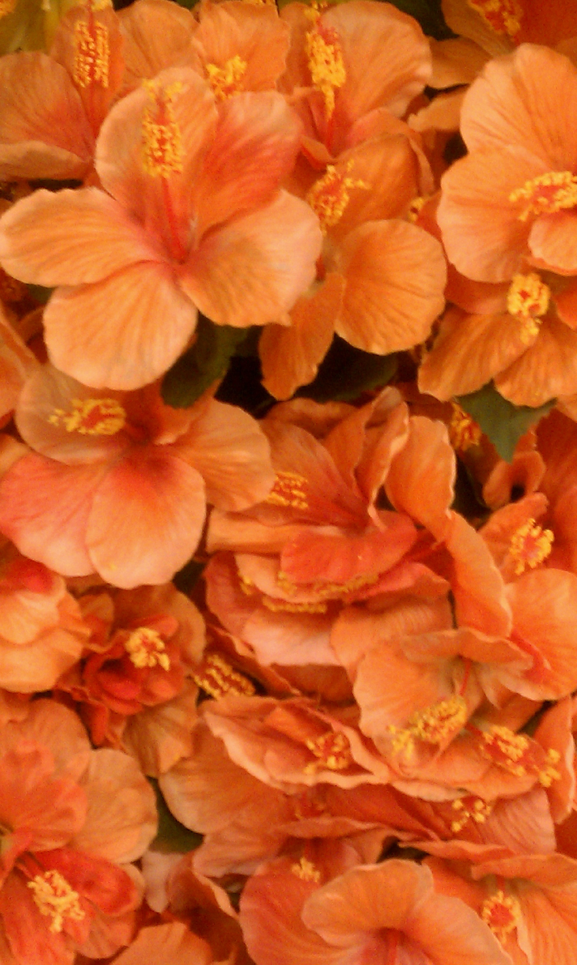 Flowers & Decor, orange, Flowers, Hydrangeas