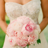 Flowers & Decor, pink, Flowers, Peony