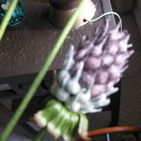 Ceremony, Flowers & Decor, purple, green, Ceremony Flowers, Boutonnieres, Groomsmen, Flowers, Groom, Boutonniere, Thistle