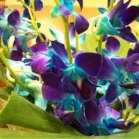 Flowers & Decor, purple, blue, Flowers