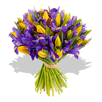 Flowers & Decor, yellow, blue, Flowers, Tulips, Iris