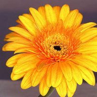 Flowers & Decor, yellow, orange, gold, Flowers