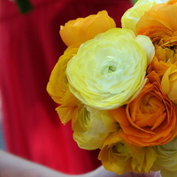 Flowers & Decor, yellow, orange, red, gold, Flowers, Ranunculus