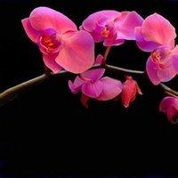 Reception, Flowers & Decor, pink, Flowers