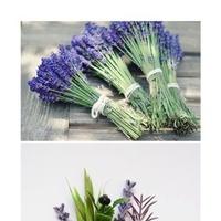 Reception, Flowers & Decor, Flowers, Inspiration board