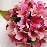 Flowers & Decor, pink, Flowers, Frangipani