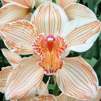 Flowers & Decor, white, orange, Flowers, Orchid