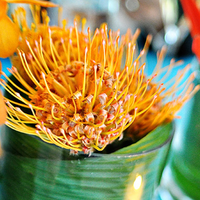 Flowers & Decor, orange, gold, Flowers