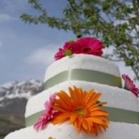 Cakes, white, orange, pink, cake