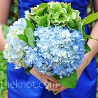 Flowers & Decor, white, blue, green, Flowers, Hydrangea