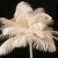 Beauty, Ceremony, Flowers & Decor, white, Feathers, Ceremony Flowers, Centerpiece, Ostrich