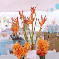 Reception, Flowers & Decor, orange