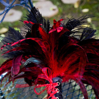 Beauty, red, black, Feathers, Bouquet, Feather