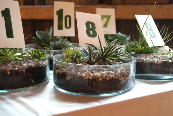 green, Custom, Table, Desert, Numbers, Greenery, Plant, Jessica erika, Shrubs, Planters