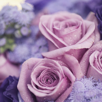 Flowers & Decor, purple, Flowers, Plum, Violet, Sandra juan