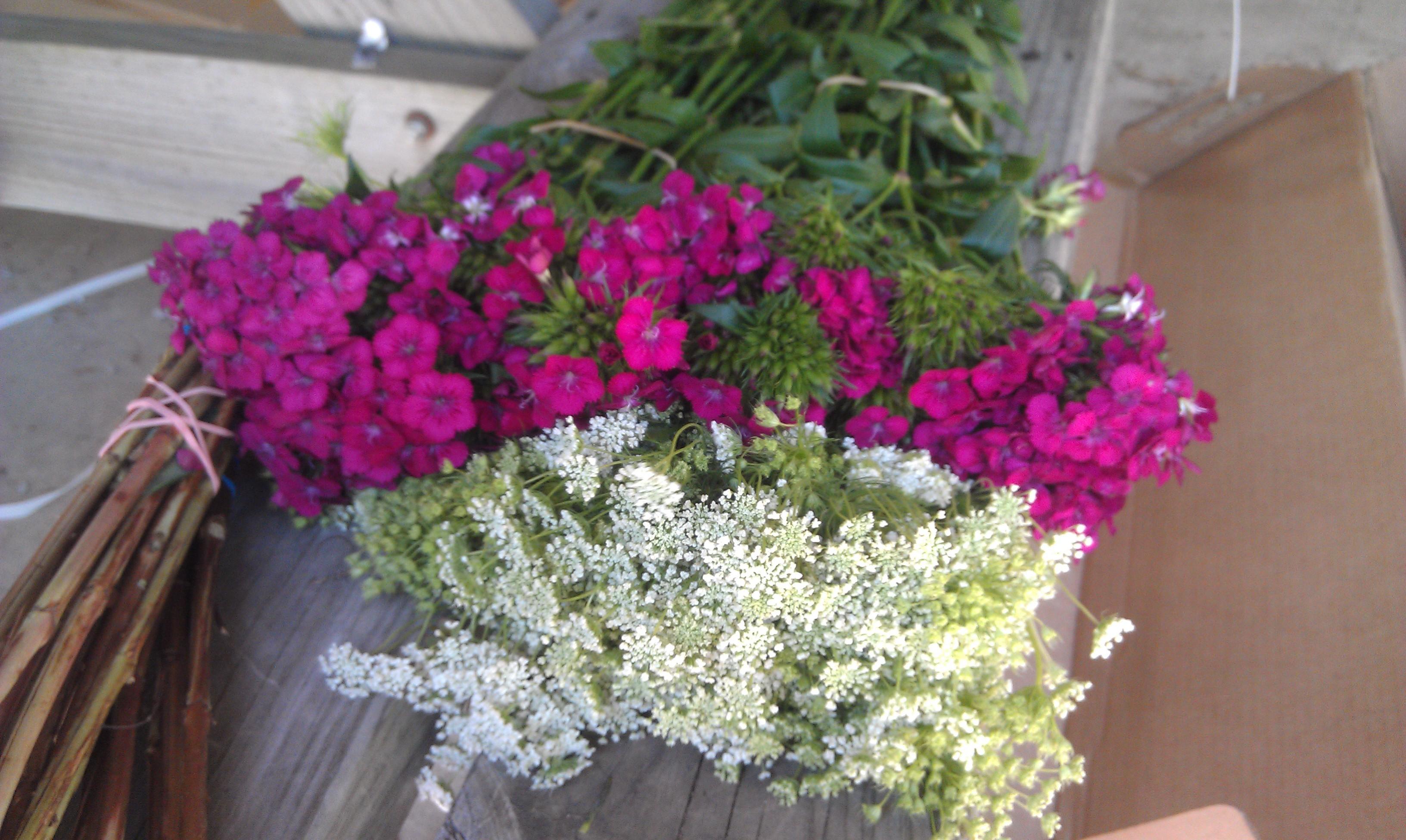DIY, Flowers & Decor, white, purple, Flowers, Club, Wildflowers, Sams