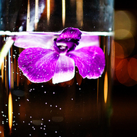 Flowers & Decor, purple, Flower, Orchids, Water, Submerge, Asha bryson