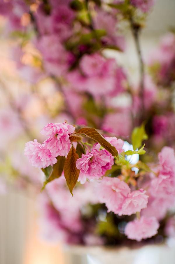 Flowers & Decor, pink, Flowers, Elizabeth andrew