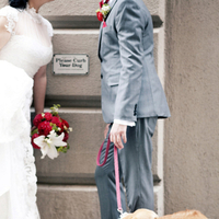 red, green, Bride, Groom, Grey, Dog, Clara dave, Corgi