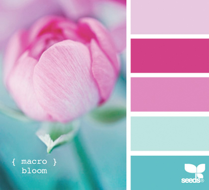 Flowers & Decor, pink, blue, Flowers