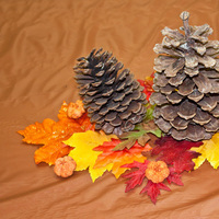 yellow, orange, brown, Fall, Bridal, Shower, Cones, Pine