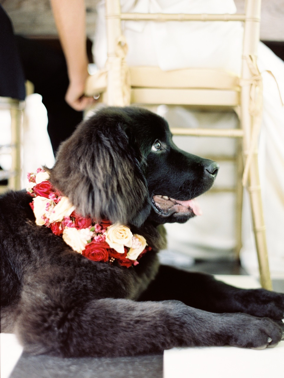 Reception, Flowers & Decor, Floral, Dog, Collar, Love poems styled wedding