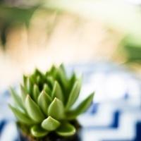 green, Navy, Succulent, Chevron, Chalinee craig