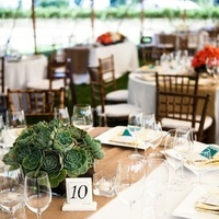 yellow, green, Table, Linens, Numbers, Succulents, Patterned, Chalinee craig
