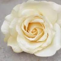 Flowers & Decor, white, ivory, Flowers, Roses, Rose, Weddingcolors, Weddingcolor