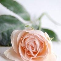 DIY: A Garden Rose Bouquet