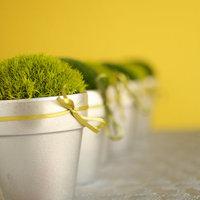 DIY: Moss Pots